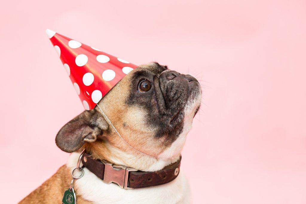 tuparit selviytymisopas koira hattu