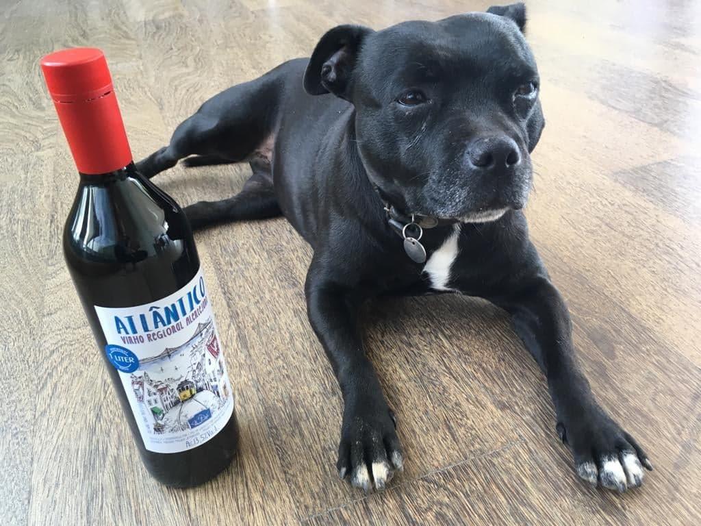 atlantico ja koira