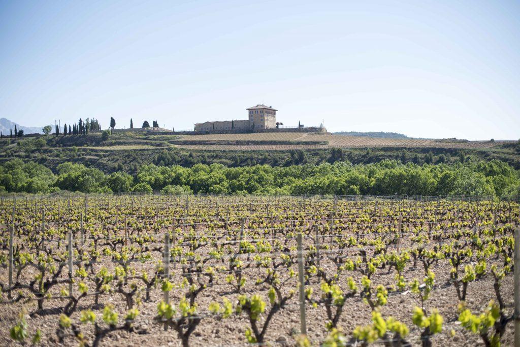 Bodega-Winery fields
