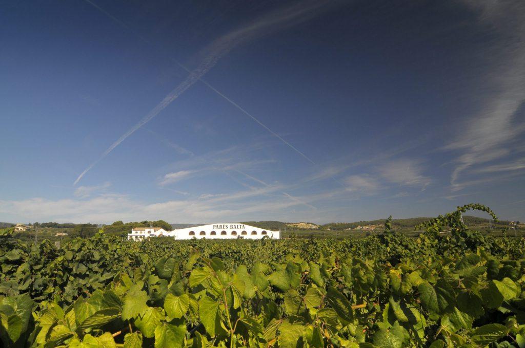Pares Balta vineyard