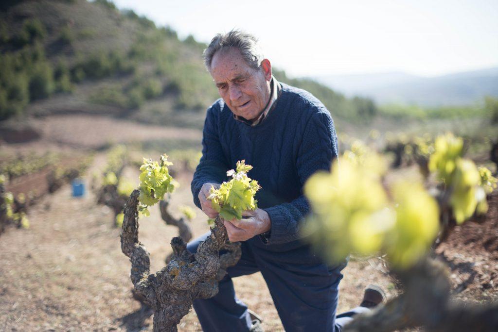 Viñedo-Vineyard RIOJA